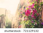 pink flowers on the street in... | Shutterstock . vector #721129132