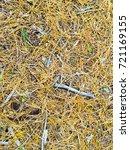 fallen golden pine needles on a ... | Shutterstock . vector #721169155
