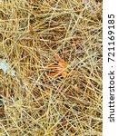 fallen golden pine needles on a ... | Shutterstock . vector #721169185