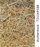fallen golden pine needles on a ... | Shutterstock . vector #721169188