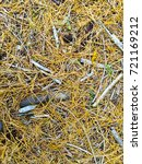 fallen golden pine needles on a ... | Shutterstock . vector #721169212