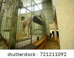 giraffe at the frankfurt zoo... | Shutterstock . vector #721211092