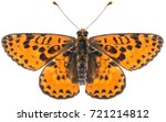Close Up Of The Melitaea Didym...