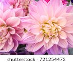 colorful flowers dahlia.... | Shutterstock . vector #721254472