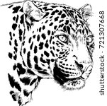 snarling face of a leopard... | Shutterstock .eps vector #721307668
