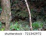 jungle  tropical rainforest  of ... | Shutterstock . vector #721342972