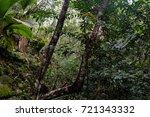 jungle  tropical rainforest  of ... | Shutterstock . vector #721343332