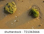 corals and moss | Shutterstock . vector #721363666
