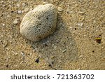 coral on the beach | Shutterstock . vector #721363702