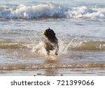 black staffordshire terrier... | Shutterstock . vector #721399066