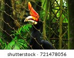 animal wild in the zoo. | Shutterstock . vector #721478056