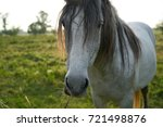 horse  animal  sunlight  field  ... | Shutterstock . vector #721498876
