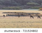 deers during mating season in ... | Shutterstock . vector #721524802