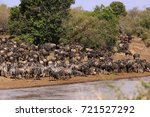 wildebeest and zebra herd at... | Shutterstock . vector #721527292