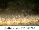 red deer | Shutterstock . vector #721540786