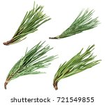 pine tree branch isolated on...   Shutterstock . vector #721549855