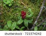 lingonberry  vaccinium vitis... | Shutterstock . vector #721574242