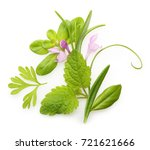 fresh spices and herbs isolated | Shutterstock . vector #721621666