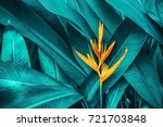 Stock photo colorful flower on dark tropical foliage nature background 721703848