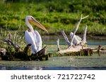 pelican in danube delta  romania | Shutterstock . vector #721722742