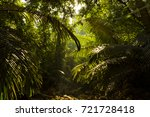 india mountain jungle | Shutterstock . vector #721728418