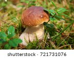 boletus edulis  english  penny... | Shutterstock . vector #721731076