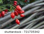 rose hip  dog rose red ripe...   Shutterstock . vector #721735342