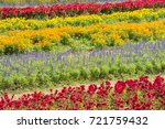 beautiful colorful flowers in... | Shutterstock . vector #721759432