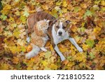 Stock photo cat and dog lying on the leaves in autumn 721810522