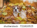 funny cat playing with a dog in ... | Shutterstock . vector #721810525