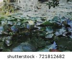 waterlilies blooming in the... | Shutterstock . vector #721812682