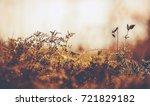 wild meadow flora close up ...   Shutterstock . vector #721829182
