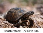 the turtle is walking on the... | Shutterstock . vector #721845736