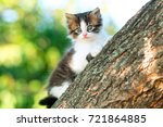 Stock photo portrait of a cute little fluffy kitten climbing on a tree branch in a village in the nature 721864885