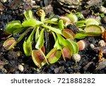 carnivorous plant            ...   Shutterstock . vector #721888282