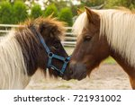 two ponys nuzzle | Shutterstock . vector #721931002