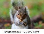 Portrait Of A Grey Squirrel...