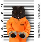 bad cat with handcuffs on white ... | Shutterstock . vector #722168902