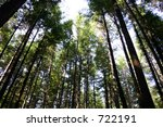 Bosque - stock photo