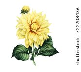 Stock photo dahlia and leaves watercolor can be used as greeting card invitation card for wedding birthday 722208436