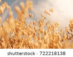 Golden Colour Wheat Field...