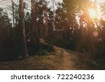 Footpath In Summer Forest At...
