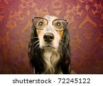 dog with cat eye glasses... | Shutterstock . vector #72245122