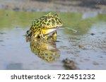 the ornate horned frog  also...   Shutterstock . vector #722451232