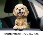 dog peeking out of a car window | Shutterstock . vector #722467726