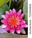 lotus meteror beautiful flowers | Shutterstock . vector #722504836