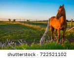 sunset as sunny the horse poses ... | Shutterstock . vector #722521102