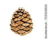 A Cone From The Forest  On A...