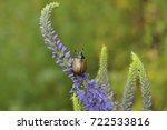 beautiful bug sits on a blue... | Shutterstock . vector #722533816