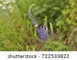 beautiful bug sits on a blue... | Shutterstock . vector #722533822